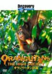 Discovery Channel Orangutans The High Society