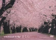 Virtual Trip Sakura -Reprise-