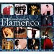 Beginner' s Guide To Flamenco