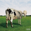 Atom Heart Mother is on the Edge : Morgaua Quartet