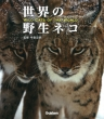 世界の野生ネコ