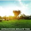 Introducing Mellow Tres