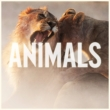 Animals (2tracks)