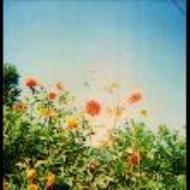 OUR REBEL SONGS 〜素晴らしきコアレコードの世界〜
