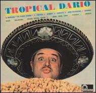 Tropical Dario -Gold Music Story