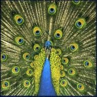 Bluetones/Expecting To Fly