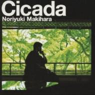 Cicada(通常盤)