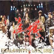 生蝉★cicala-mvta★live! 2006