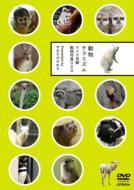 動物チラリズム カメラ目線動物写真DVD