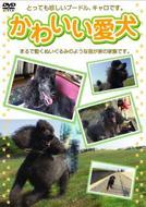 HMV&BOOKS onlineDocumentary/かわいい愛犬