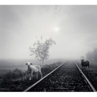 MERRY VERY BEST 〜白い羊/黒い羊〜(+DVD)【初回限定盤】