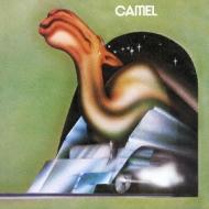 Camel +2