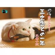 「猫侍カレンダー 玉之丞との一年 二〇一六」/ 『猫侍』