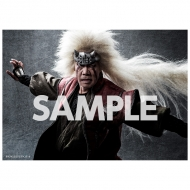 ブロマイド2枚セット(自来也) / ライブ・スペクタクル「NARUTO-ナルト-」