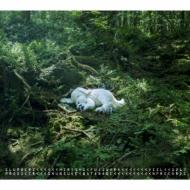 slumbers 【Deluxe Edition】