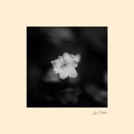 花【2018 レコードの日 限定盤】 (7インチシングルレコード)