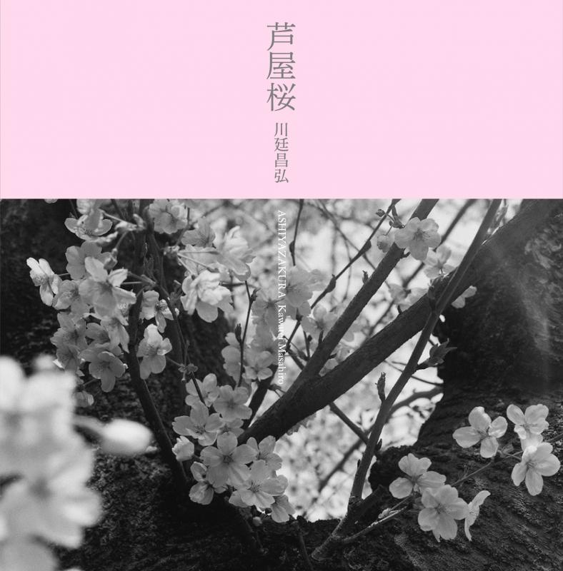 写真集 芦屋桜
