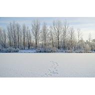 はじめてのクラシック〜冬に聴きたい名曲5選