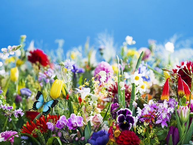 蜷川実花展 ―虚構と現実の間に―