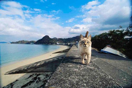 岩合光昭 いよねこ 猫と旅する写真展(愛媛)