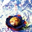 針の穴 【初回限定盤】(+DVD)