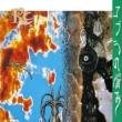 コブラの悩み【生産限定盤】(MQA-CD/UHQCD)