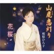 山鹿恋灯り/花桜