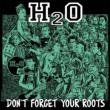 Don' t Forget Your Roots