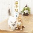猫中毒 【通常盤】