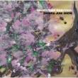 森羅十二象 (2枚組アナログレコード)