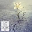 Lily 【アーティスト盤】(+DVD)