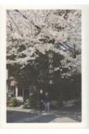桜の木が一本