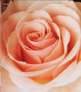 Best Flower-B side c