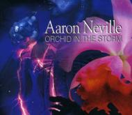 Orchid In The Storm