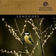 Songbirds