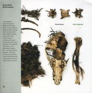 Soil Creatures