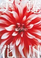 QUOTATION BOOKS couleur 「蜷川実花の20年を知る」