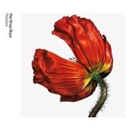 Release: Further Listening 2001-2004 【デラックス・エディション】