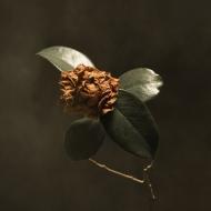 Young Sick Camellia (150g)
