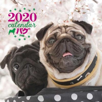 2020年 大判カレンダー パグ