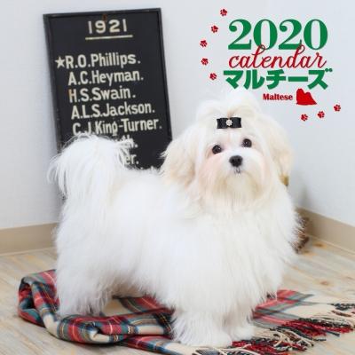 2020年 大判カレンダー マルチーズ