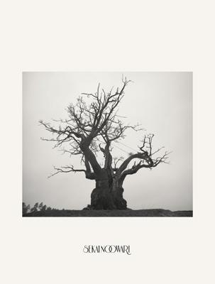 SEKAI NO OWARI 2010-2019 【完全生産限定プレミアムBOX】(2CD+DVD+ヒストリーブック+スペシャルコンテンツ)