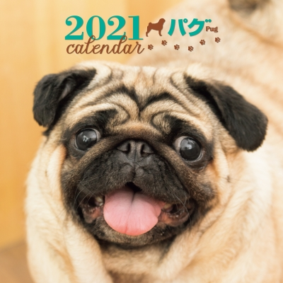 2021年 大判カレンダー パグ 誠文堂新光社カレンダー