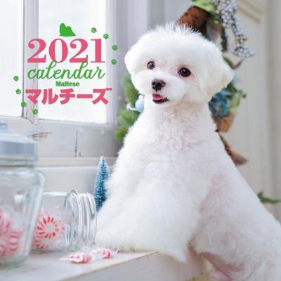 2021年 大判カレンダー マルチーズ 誠文堂新光社カレンダー
