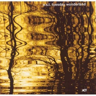 Tuesday Wonderland