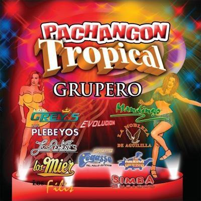 Pachangon Tropical Grupero