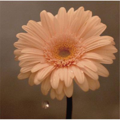 花は咲く (NHK「明日へ」東日本大震災復興支援ソング)(+DVD)【初回限定盤】