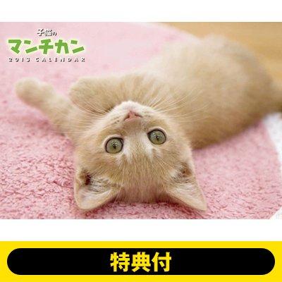 【特典付】子猫のマンチカン / 2013年カレンダー