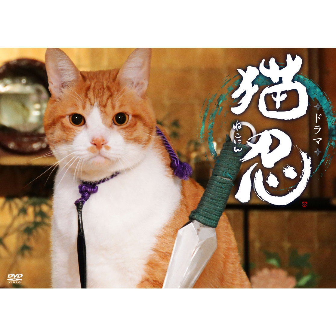 ドラマ「猫忍」DVD-BOX