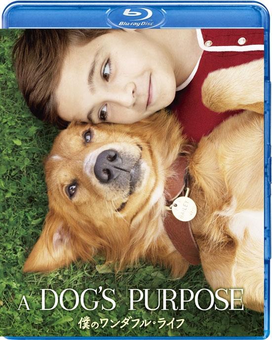 A Dog`s Purpose